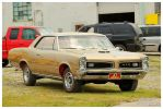 A Gold GTO by TheMan268