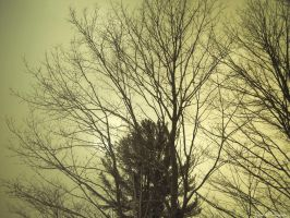 Between The Branches. by Sparkle-Photography