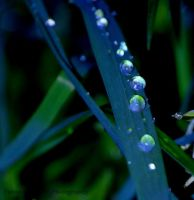 Rain drops by CantRainAllTheTime-1