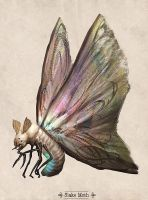 Slake Moth by Justinoaksford