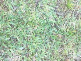 Day 29: The Green Grass Grows by Caedy