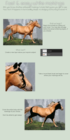 White Markings Tutorial by xxAuroraStudios