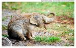 2013 06 15 Elephunny by HumanDescent