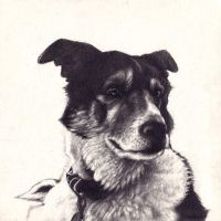 Another dog portrait by ThaHellion