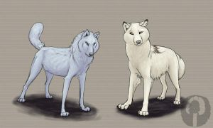 Comparing white wolves by SnowySMT