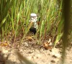 The Radiotrooper: Lost in the Wilderness by Carmine777