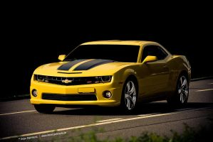 Bumble Bee by AmericanMuscle