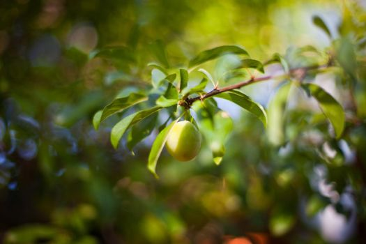 Unripe From The Tree by MichaelJackson-Rand