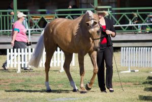 STOCK - 2014 TotR Arabians-26 by fillyrox