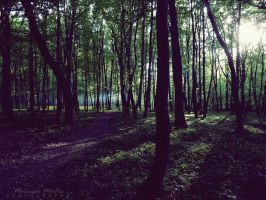 Forest by Narcissa-Mortis