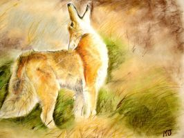 Coyote in the Field by FeraCoyote
