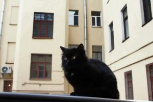Black Cat 3 by Arina1