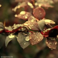 berberis by DeviantFyon