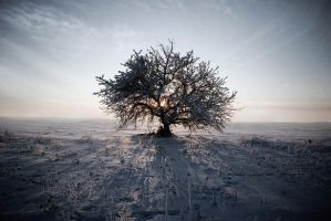 Winter tree by iilva