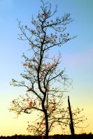 Crazy Branches by LDFranklin