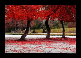 Leaves of Autumn by Frider