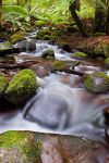 Cement Creek , Yarra Ranges by fusionx