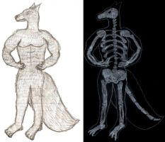 wolf man and x-ray by Fryderyka-Sylwia