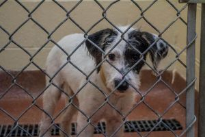 Terrier Mix - Returned to Owner by SkyRats