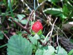 Strawberry by Olgola