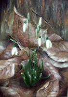 Snowdrops by IoanaM-art
