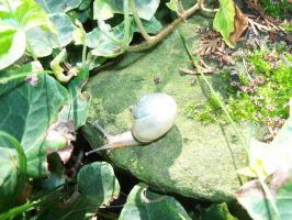 Snail on a mossy stone by Mecarion