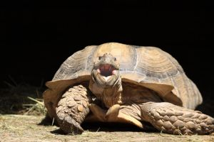Giant turtle by geoale1977