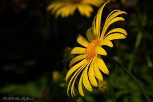 Yellow by Britha