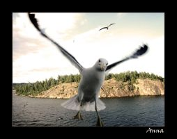 Come Fly with Me by FantomDroppings