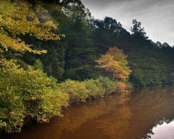 Early Fall by phydeau