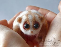 Micro Loris by FamiliarOddlings