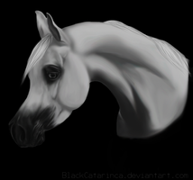Arabian horse by BlackCatarinca