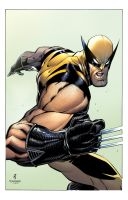 John Timms/Tim Townsend Wolverine Colors by DavidCuriel
