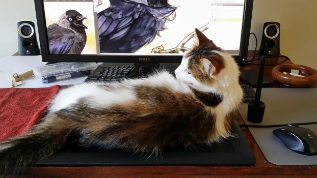 Introducing the Wacom Cat Mat by MistiqueStudio
