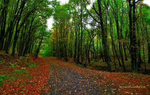 forest road by inocent