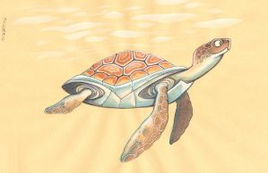 turtle by iktis