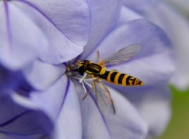 hover fly by Artwork-Production