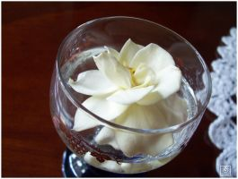 Gardenia in Glass 2 by deftones