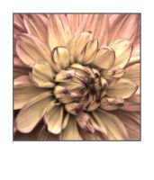 Giant Dahlia by pubculture