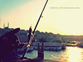 Istanbul Fish by zahrey