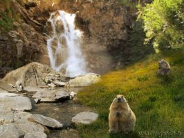 Marmot Afternoon by Nolamom3507
