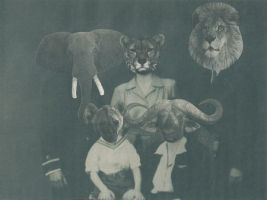 The Lion Family by hrn
