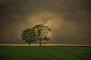 The Rapeseed Field by Flash-and-Flair