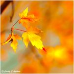 Golden colors' warming glow by CecilyAndreuArtwork