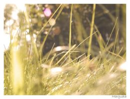 grass by margueta
