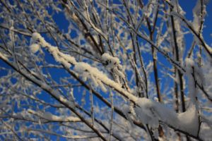 snowy tree 3 by FreedomeSoul88