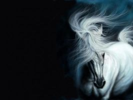 white horse by tom274