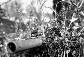 Pipe with Vines by datonel