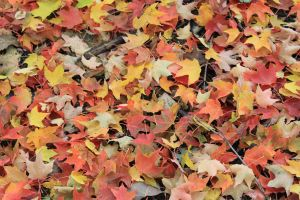 Fallen Leaves 2 by Hjoranna