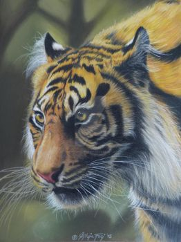 Silent Hunter - a Colored Pencil Drawing by theArtofsilviafrei